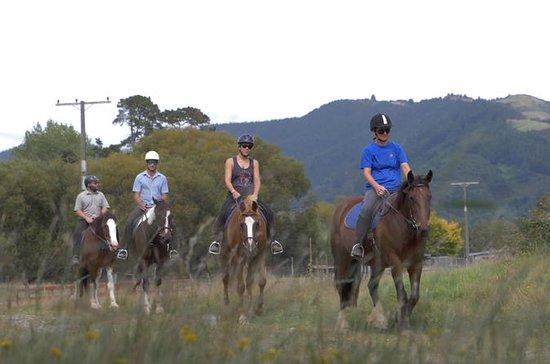 Excursão Fazenda a Cavalo