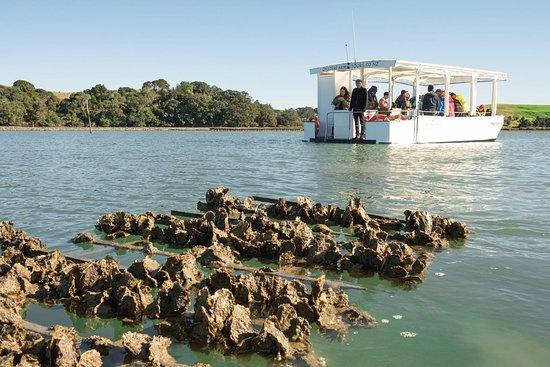 Matakana River Tours
