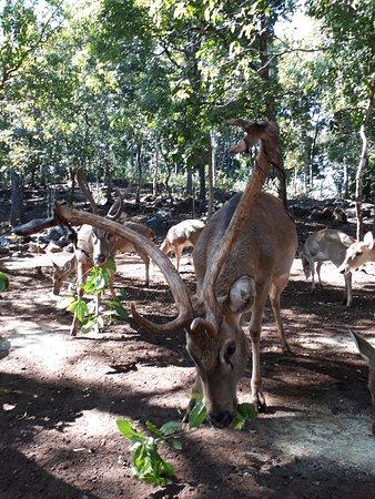 Sadaku forest deer camp in popa mt.
