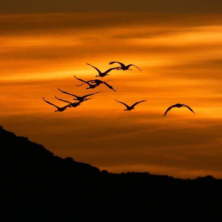 Así son los amaneceres entre grullas en la Laguna de Gallocanta, probablemente el mejor lugar de Europa para observar estas aves durante su migración invernal.