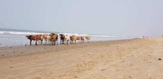 Kafountine, Senegal: Playa de Kaufuntine, increíblemente bella y solitaria