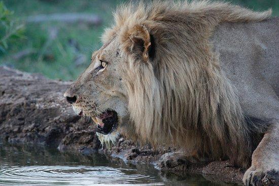 Djuma Game Reserve Foto