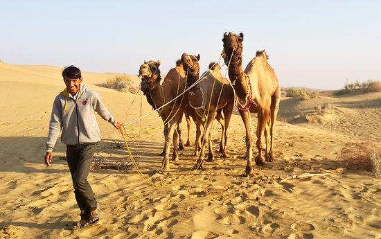 Die Milliarden Sterne Erfahrung in der Wüste: Our camels