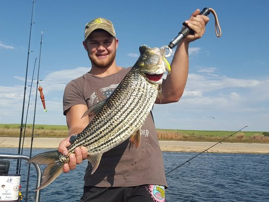 Marloth Park, South Africa: Tiger fish caught in the Komati river