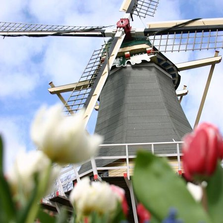 Holland Private Tour offers, tailor made tours, with focus on countryside and authentic experiences. Our local guides show the guests Dutch highlights on- and off- the beaten path.