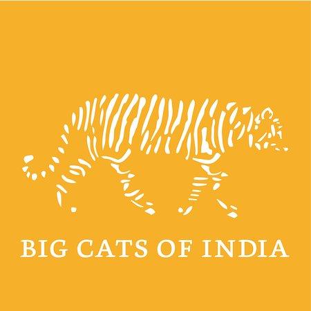 Big Cats of India