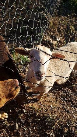 Colesberg, Sudafrica: Van Zylsvlei