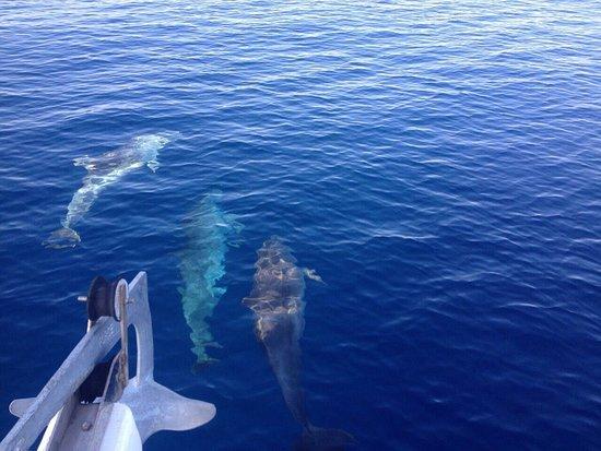 Neos Marmaras, Grecia: If you are lucky you may swim with Delfina!!!