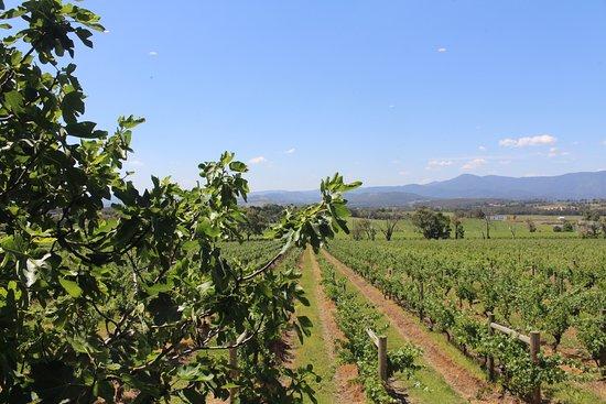 Yarra Yering : Vineyards