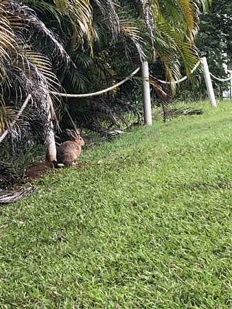 Limpinwood, Australië: A perfect Easter break, even the Easter Bunny came to visit!!