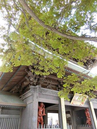 Daikaku-ji Temple: 大覚寺~山門一部