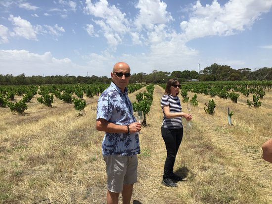 Barossa Valley, Australien: The wine makers with their Grenache bush vines in the background