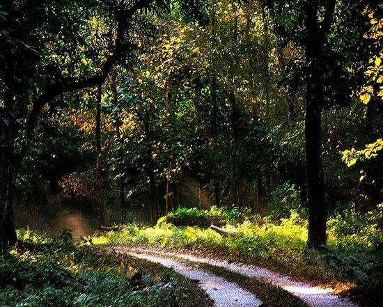 Jaldapara Wildlife Sanctuary, الهند: The Forest..