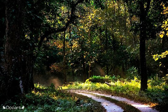 Jaldapara Wildlife Sanctuary, India: The Forest..