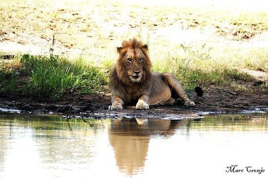 Safari del Re Leone da 2 notti a