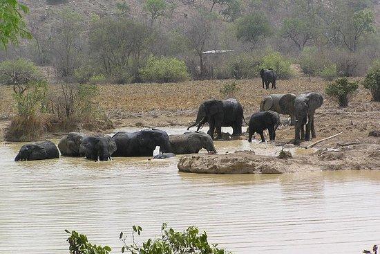 Safari de 4 jours dans le parc...