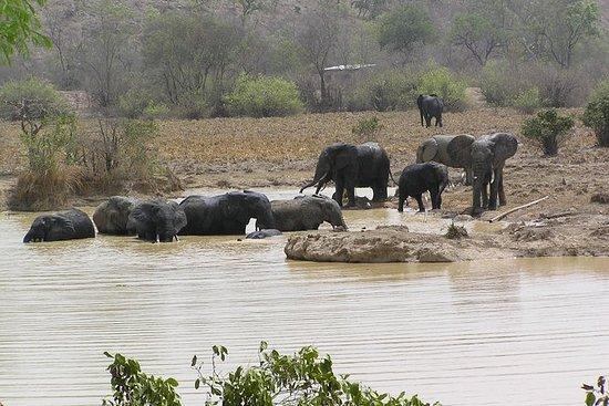 Safari guidé de 8 jours au Ghana...