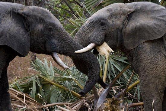El mejor Safari de Vida Silvestre de...