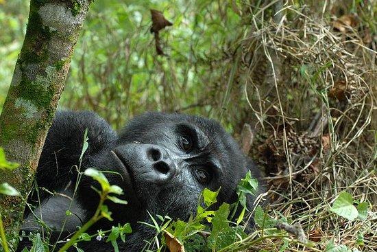Safari Gorilla de 3 jours au Rwanda
