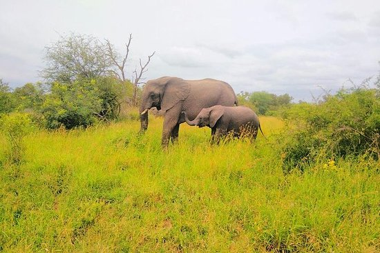 Pilanesberg Safari sous tente de 4...
