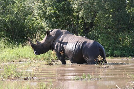3-Day Tented Kruger Park Safari from...