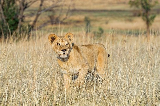 3-Day Chalet Kruger Park Safari from...