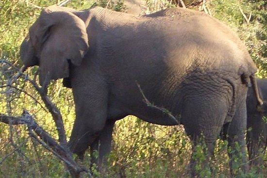 Safari de 3 noches desde Nairobi...