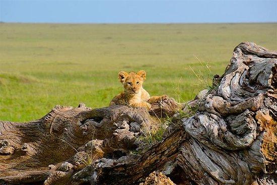 ウガンダゴリラサファリと野生動物体験のベスト7日間