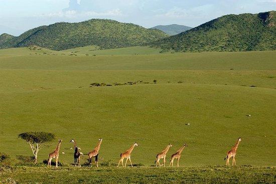 蒙巴萨的3日马赛马拉野生动物园