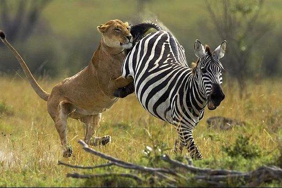 6-Day Masai Mara, Lake Nakuru and...