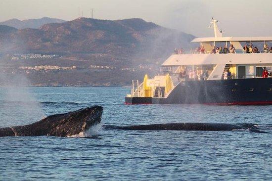 Crociera alla scoperta delle balene