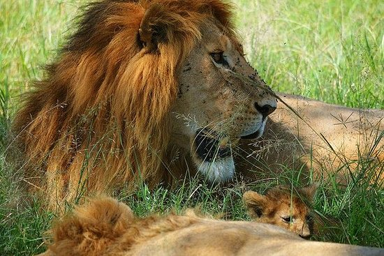 3-Day Masai Mara Guided Safari from...