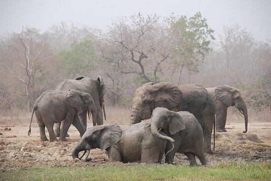 4 jours Wildlife Safari Cyclisme et...