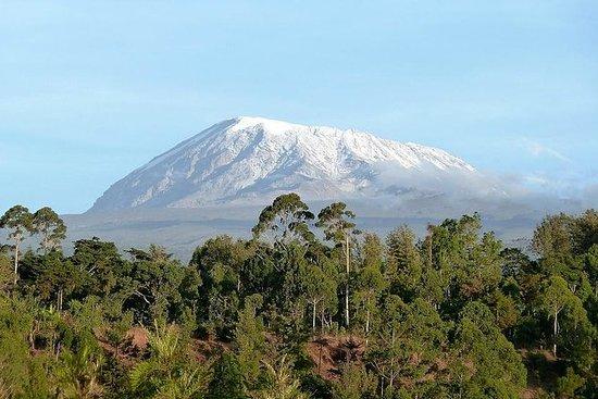 Monte Kilimanjaro Climb- Machame