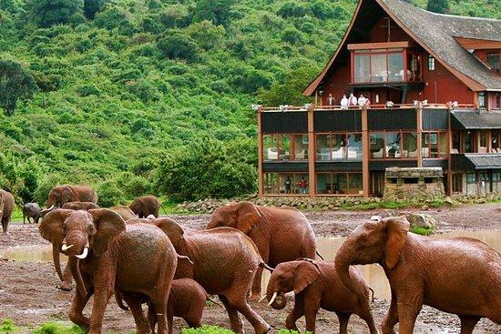 Nakuru et Masai Mara Safari de 5...