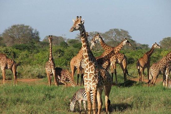 5days Tour to Amboseli Tsavo West and...