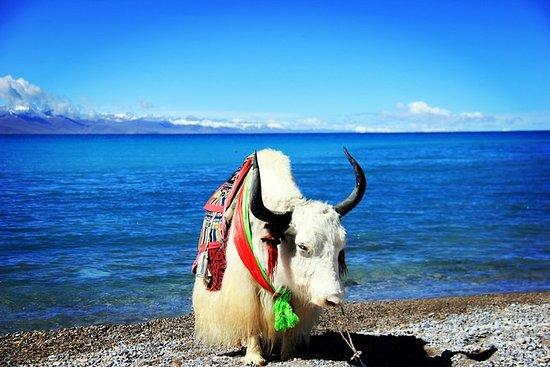 4-Day Lhasa and Lake Namtso Private Tour