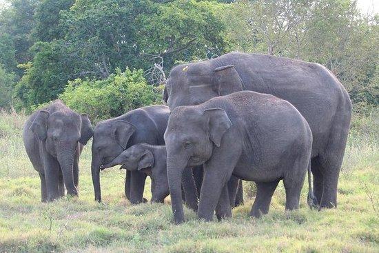 2天私人旅游 - 加勒的野生动物和世界遗产之旅