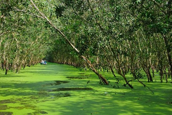 3-day Mekong Delta tour with Tra Su...