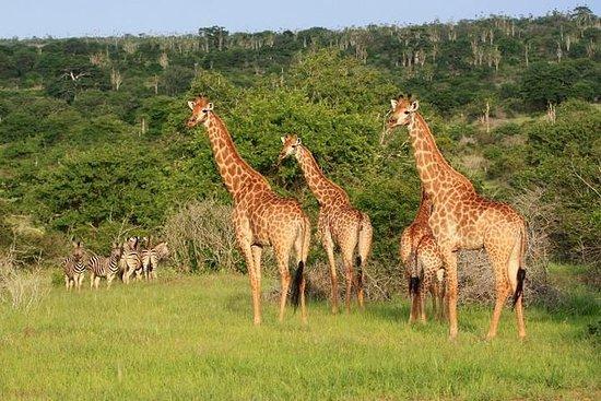 安哥拉基本奥德赛:罗安达 - 基萨马公园宽扎河 - 卡兰多拉瀑布
