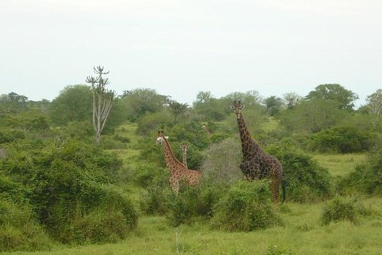 Kissama National Park Overnight Tour...