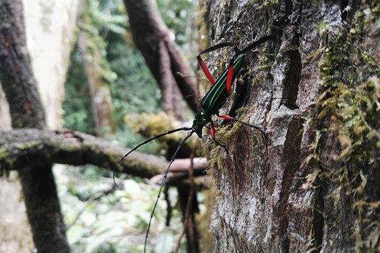 Monteverde Cloud Forest Preserve...