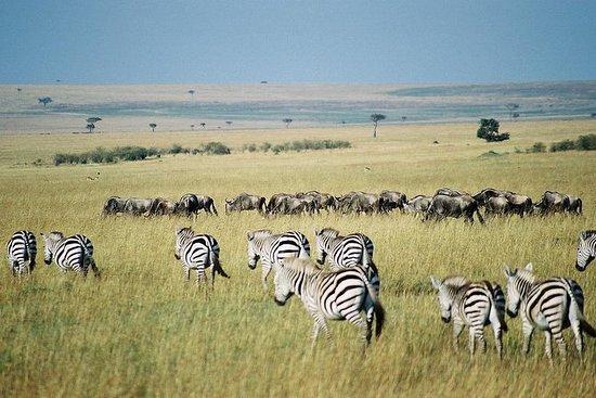 内罗毕的Keekorok Lodge酒店为期3天的Maasai...