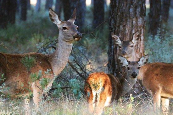 Donana National Park i to dage fra...