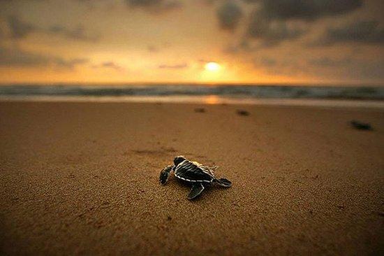 03 Days Beach Holidays in Srilanka 사진