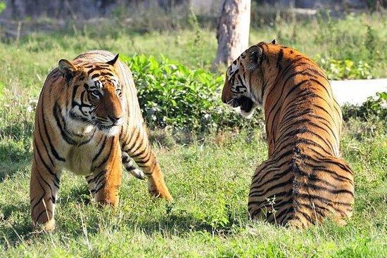 来自德里的Ranthambhore老虎野生动物园为期5天的金三角之旅