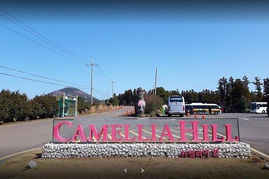 Jeju Camellia hill rabatt billett