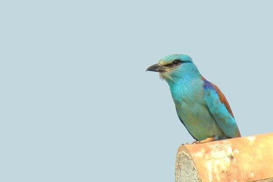 Privat fågelskådning dagstur till ...