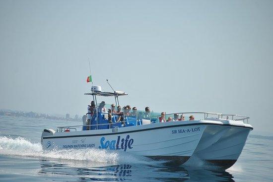 Sealife Dolphin Watching, Lagos...