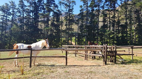 Our neighbours (the while and brown was the friendly mare :-) )